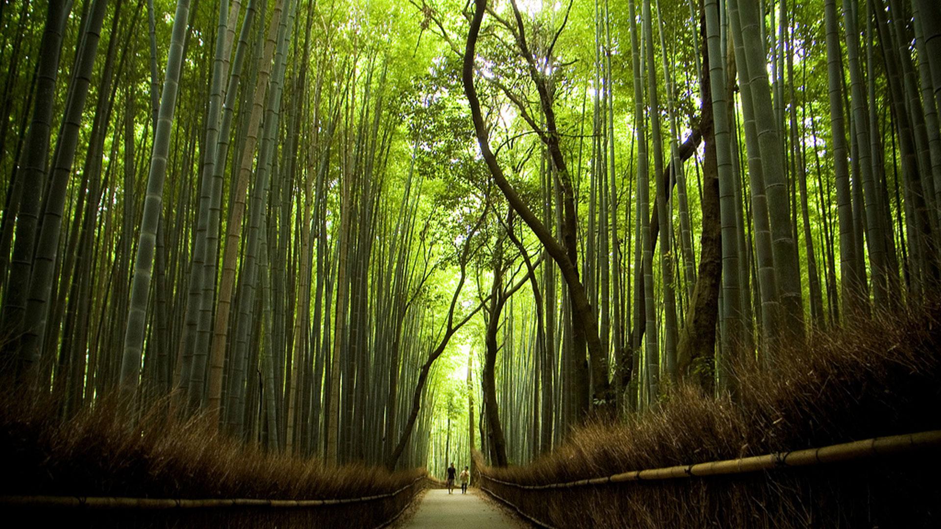 Sagano.Bamboo.Forest.original.1514