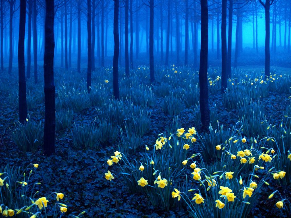 Yellow-on-Blue-Black-Forest-Germany