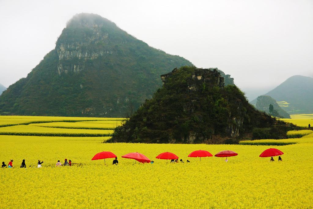luoping-china-yellow-fields-stunning3