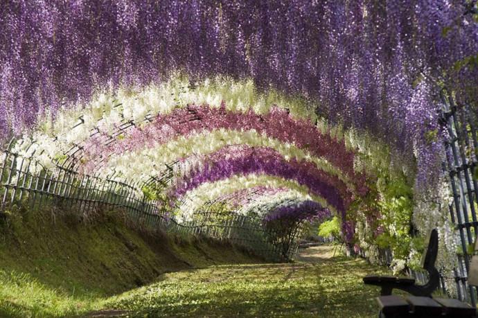 wisteria-tunnel-japan-woe3-690x459