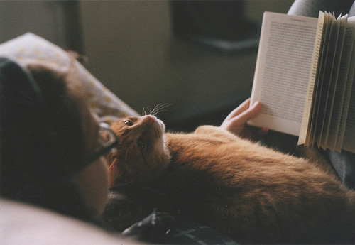 bed-book-cat-cuddle-Favim.com-610258