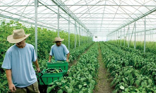 agriculture.jpg-